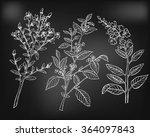 hypericum  melissa. salvia.... | Shutterstock .eps vector #364097843