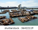 sea lions on pier 39 in san...