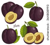 Plum Isolated  Plum Vector....