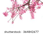 wild himalayan cherry on tree... | Shutterstock . vector #364842677