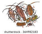 cockroaches and maggots