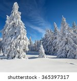 trees covered with hoarfrost... | Shutterstock . vector #365397317