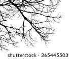 branch silhouette on a white... | Shutterstock . vector #365445503