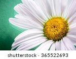 Close Up Of A White Daisy...