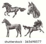 horses. design set. hand drawn... | Shutterstock .eps vector #365698577
