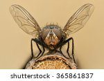 Extreme Magnification   Fly...