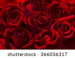 Stock photo dark red roses flower background with water drops 366036317