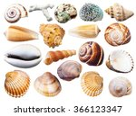 Set Of Various Mollusk Shells...