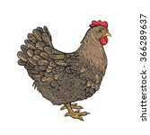 vector color chicken... | Shutterstock .eps vector #366289637