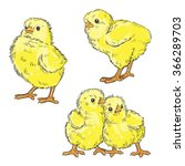 vector color chickens... | Shutterstock .eps vector #366289703