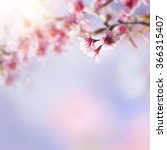 Stock photo blue and pink background with cherry blossoms framing the bright vibrant sky with sunshine spring 366315407