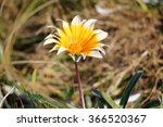 flowers   Shutterstock . vector #366520367