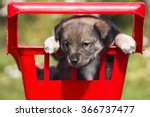 Stock photo funny puppy in a basket 366737477
