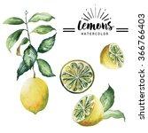 lemon watercolor hand drawn... | Shutterstock . vector #366766403