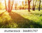 summer field with birches in... | Shutterstock . vector #366801707