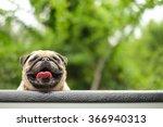 I Am Happy Pug Dog.  Face Of A...