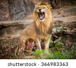 Male Lion On A Stone.