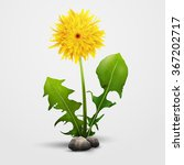Dandelion Flower Isolated On...