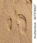 adult and child footprints in... | Shutterstock . vector #367376027