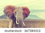 wild african elephant. vintage... | Shutterstock . vector #367384313