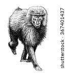 monkey baboon drawing | Shutterstock . vector #367401437