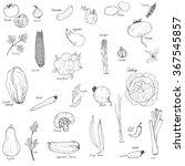 hand drawn vegetables set  ... | Shutterstock .eps vector #367545857