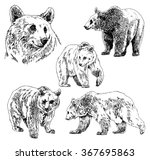 vector set of bears sketch ...