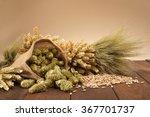 beer ingredients     hops ...   Shutterstock . vector #367701737