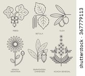 Set Vector Icons Medical Herbs...