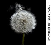 Small photo of Dandelion seed head close-up with airborne seeds caught in the wind.