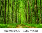 spring forest trees. nature... | Shutterstock . vector #368274533