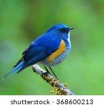 Himalayan Bluetail Or Himalaya...