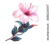 hand drawn  watercolor floral... | Shutterstock . vector #368626547
