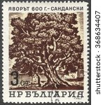 """Small photo of MOSCOW, RUSSIA - CIRCA JANUARY, 2016: a post stamp printed in BULGARIA shows an old tree """"Acer platanoides"""", the series """"Old Trees"""", circa 1964"""