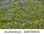 Spring Flowers Bluebells