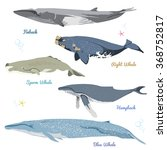 set of 5 detailed whales from...