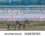two zebras in the background... | Shutterstock . vector #368838383
