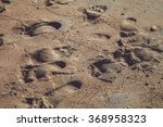 sand pattern of a beach in the... | Shutterstock . vector #368958323