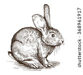 hand drawn sketch of  rabbit | Shutterstock .eps vector #368961917