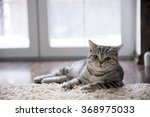 Stock photo cat 368975033