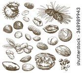 nut set sketches | Shutterstock . vector #368989943