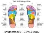 foot reflexology chart with... | Shutterstock .eps vector #369196007