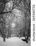 Small photo of Trees in the Park in Winter in Akureyri, Iceland