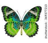 Colorful Butterfly Lower Wing...