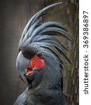 Black Parrot Palm Cockatoo ...