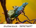 Two Iguanas On A Dry Branch
