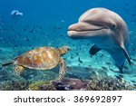 Dolphin And Turtle Underwater...