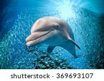 Dolphin Underwater On Ocean...