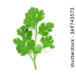 parsley isolated on white | Shutterstock . vector #369743573