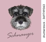Schnauzer Dog Portrait. Vector...